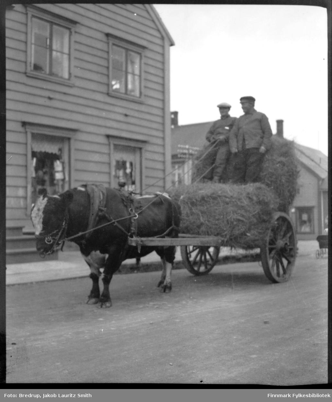 Arnt Hallonens okse trekker et stort lass høy gjennom gatene i Vadsø.  To menn sitter på vogna, antakelig er det Hallonen selv som holder tømmene.