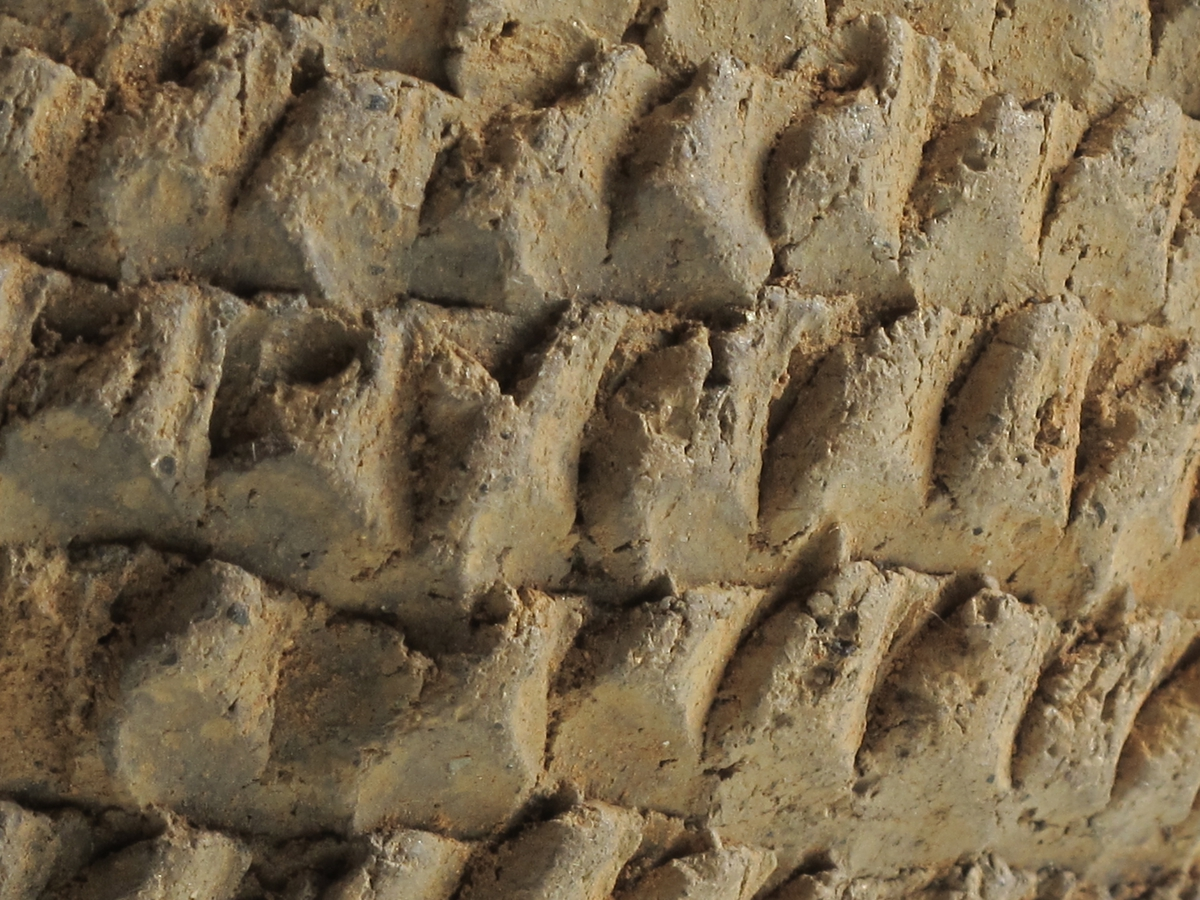 """11 skår av et """"vortebeger"""" av svart-grålig, temmeligtykt, godt brent gods, med polert utside av serien Bøe:Keramikk, fig. 134-36. Stykket har noe utbrettet rand, svakt innsvunget hals, som går jevnt over i den høye, buketenederdel. Halsornering som på fig. 134. De skarpt avgrensete """"knottene"""" er ordnet i tettstilte rader uten noe markert ribbing. Ståflaten markert. Ingen spor av hank. Flere skår er sammenhørende så full karhøyde foreligger. Høyde 13,2 cm, munningsdiam. 14,8 cm. (A. 2194 a)."""
