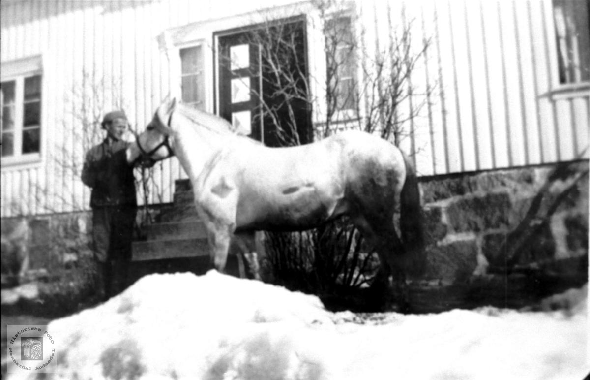 Gerald og hesten.