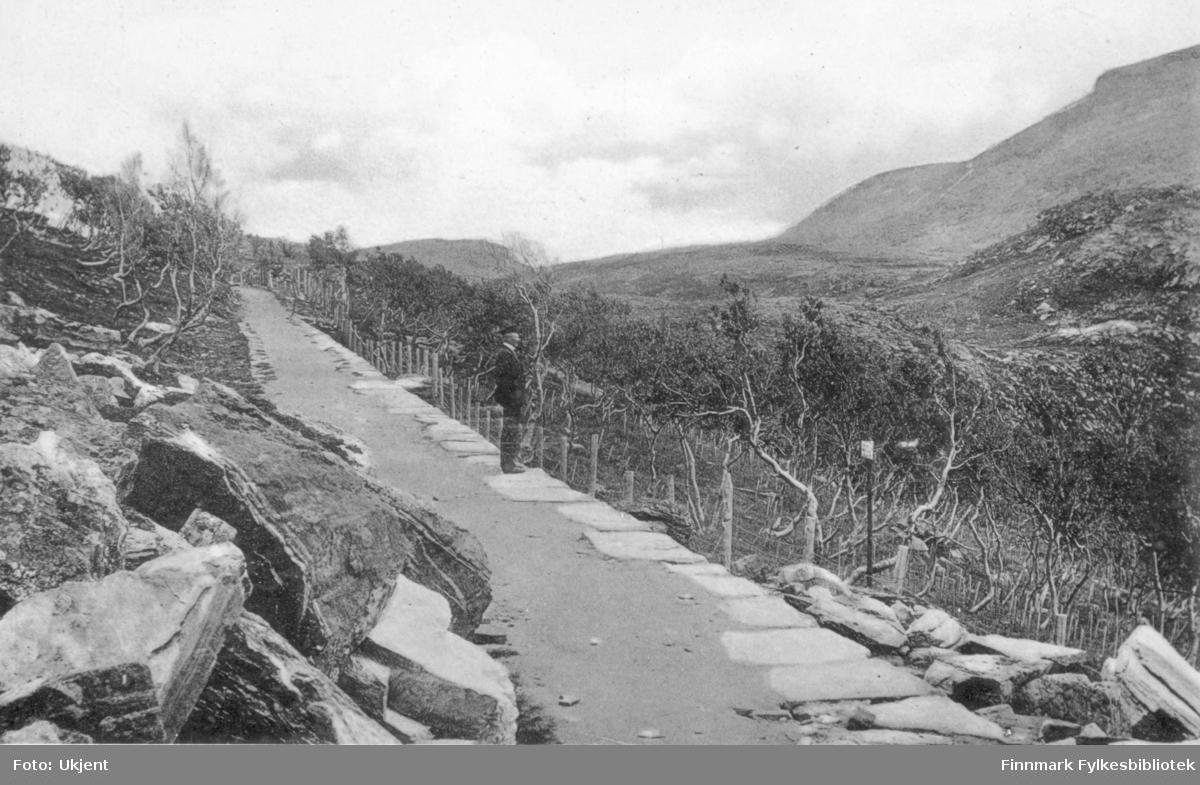 'Norge- Verdens nordligste Birkeskov. Hammerfest' er det trykket på dette postkortet. Bildet viser en vei langs et steinfylt miljø. En mann står på stien og ser utover. Han er kledd i jakke, bukse,sko og hatt. ved siden av veien kan man se flere trær, i horisonten ser man fjell.