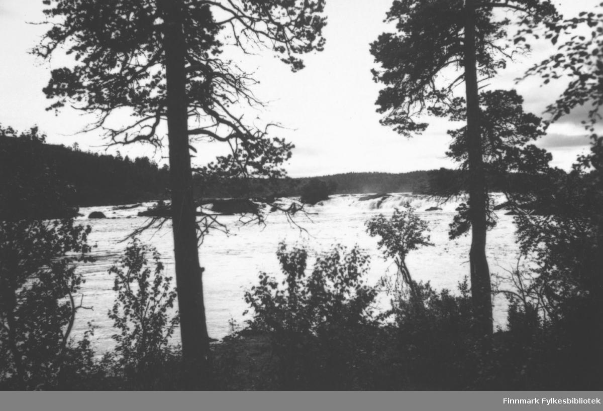 'Skogfoss, Pasvikelven' B 7804
