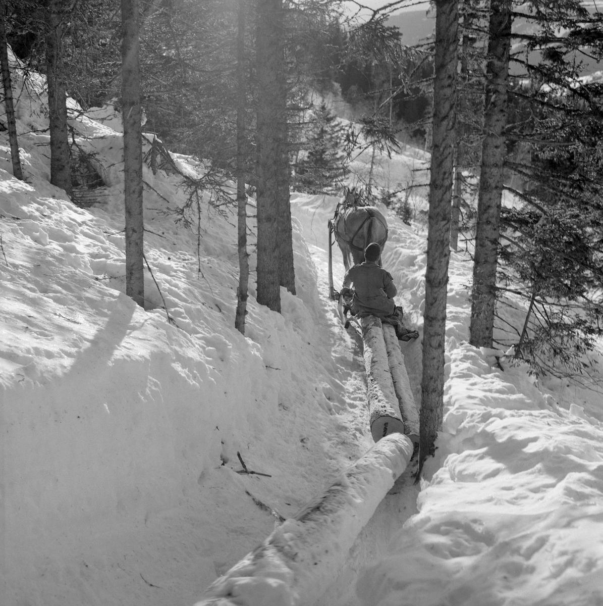 Hankekjøring av tømmer i Vestre Gausdal i mars 1967. Fotografiet er tatt et stykke oppe i lia der hesten, en fjording, trakk de sammenkjedete tømmerstokkene på en smal veg som tømmerkjørerne hadde måkt og tråkket i djupsnøen med sikte på å få tømmeret trygt ut av skogen og videre nedover den bratte lia. Ei normalvending under hankekjøring i det bratte terrenget i Vestre Gausdal var på om lag tre tylfter (36 stokker), men under gode forhold skal det ha vært kjørt vendinger på oppimot 100 stokker. Hvor mye tømmer som fantes i den vendinga som er avbildet her vet vi ikke eksakt. I dette tilfellet vet vi imidlertid at det var tre kilometers kjøreveg. Når strekningen var såpass lang rakk tømmerkjørerne bare to vendinger om dagen i den mørkeste tida (desember-januar). Dette fotografiet ble tatt i mars 1967, da Kjell Søgård og Tore Fossum fra Norsk Skogbruksmuseum var i Vestre Gausdal for å gjøre opptak til en kulturhistorisk dokumentasjonsfilm om tømmerkjøringstradisjonene i bygda. I kommentarene til filmen sier gausdølen Nils Bjørge følgende: «Under hankekjøring lyt det væra godt samspell mellom hæst og kar, ska' vendinga gå godt. Enkelte øykje lære konsta bæ're ell andre. Døm tek hardt ti før å få løyst vendinga i starta, og så legg døm seg kraftig ti sæla'n der det er flate og tunge strekninger.»
