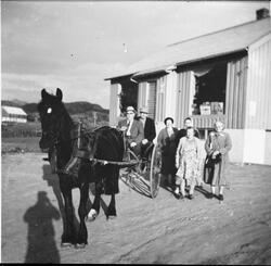 """Handletur med hesten """"Bruna""""på Adserøy Landhandel, Asserøya,"""