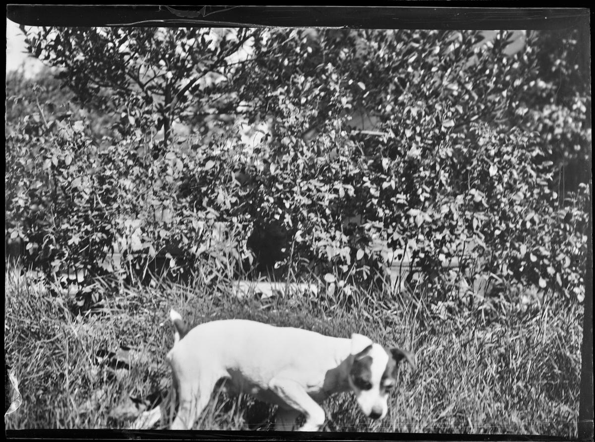 En hund foran trær.
