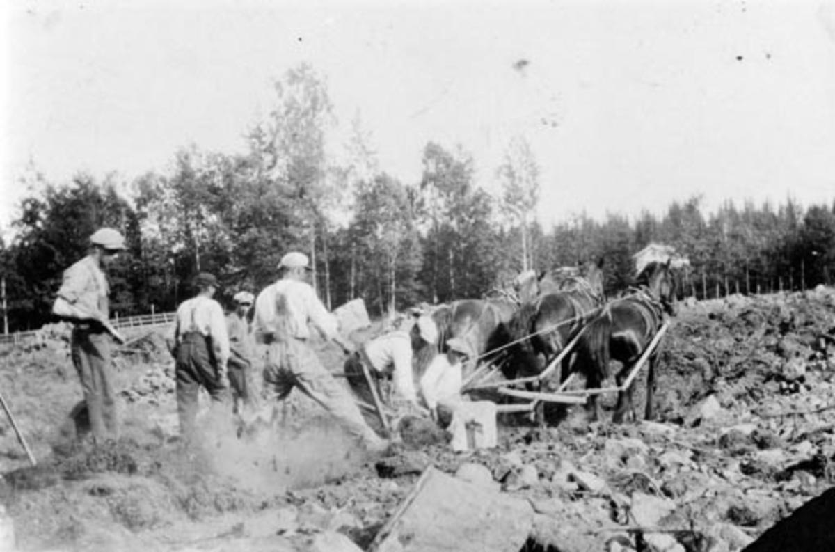 Nybrottsarbeid på Kråkerud, Ringsaker. Trespann hester med plog. Seks menn arbeider.