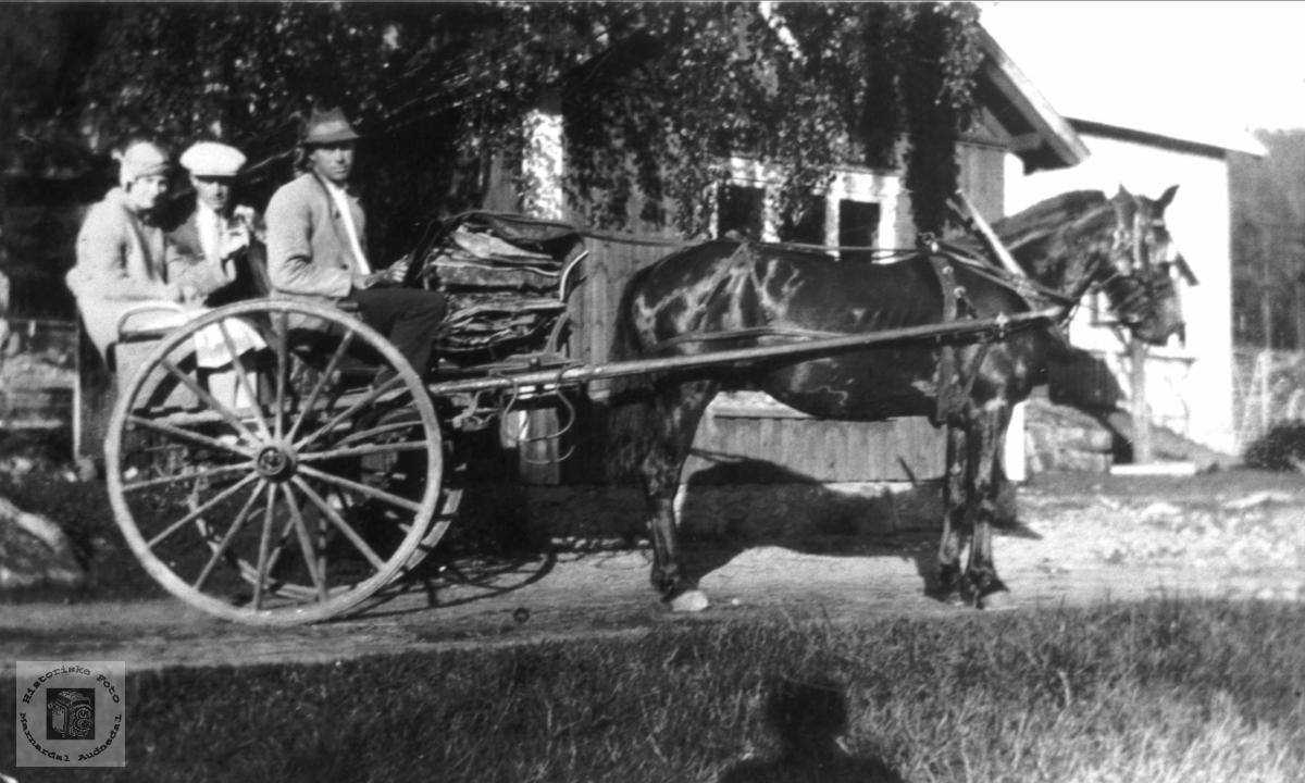 Transport med hest og karjol på Stedjan, Bjelland.