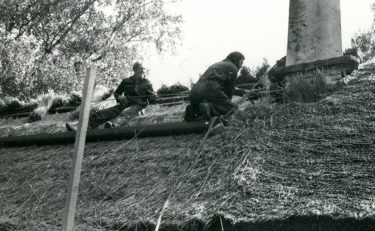 Halmtakläggning på manhusbyggnaden från Krafsagården i Olofstorp, Valinge i september 1980.
