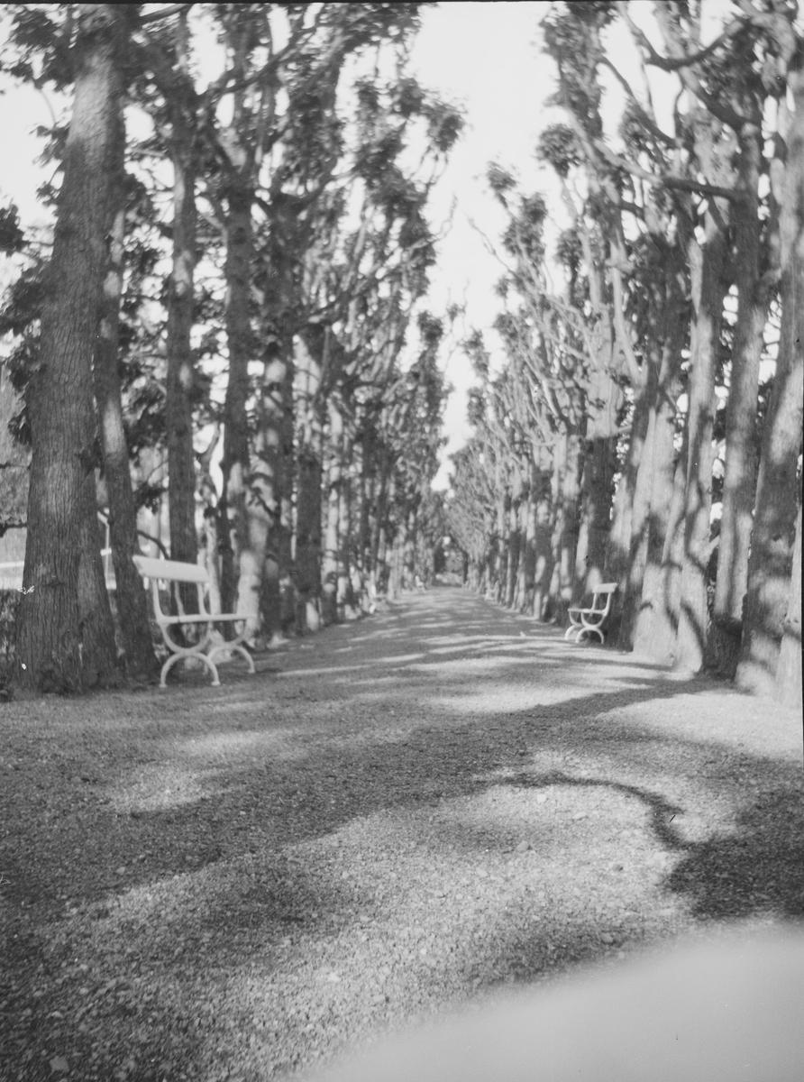Lindehallen på Linderud gård om våren. Trærne med ennå ikke fullt utvokst bladverk kaster lange skygger på veien. På hver side av veien, med gjevne mellomrom, står det hagebenker.