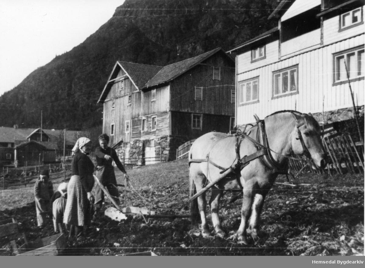 På garden Jordheim, Nilsongarden,65.3, i Hemsedal i 1954. Frå venstre: Oddvar, fødd 1948; Gunhild (bak), fødd 1950; Birgit K., fødd Torset 1925; Gunhild S. Jordheim, fødd 1891. Potetopptaking