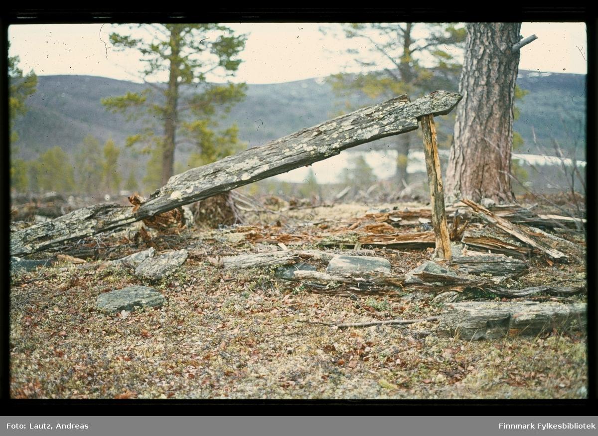 Karasjok i 1972. Rester av ulvefelle (rihttá).