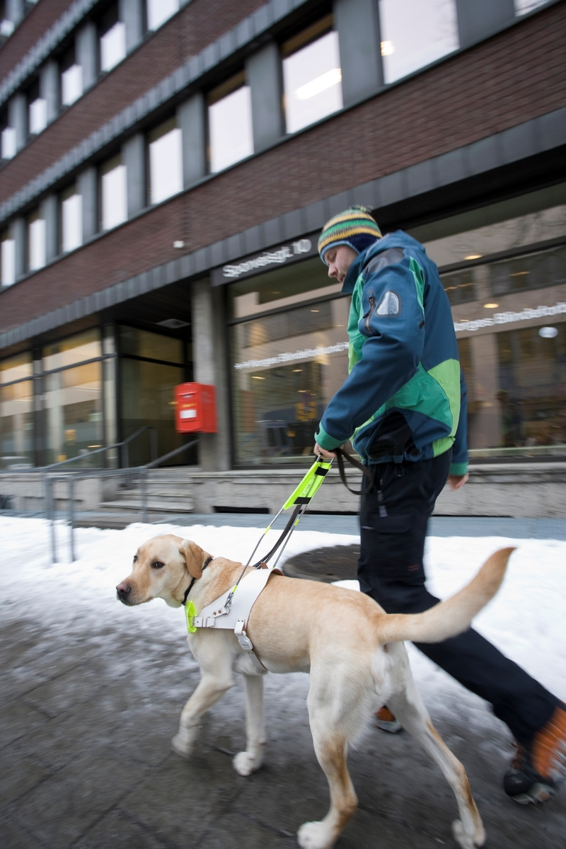 Førhundskole. Førerhund på treningstur med førerhundtrener i området Majorstuen i Oslo