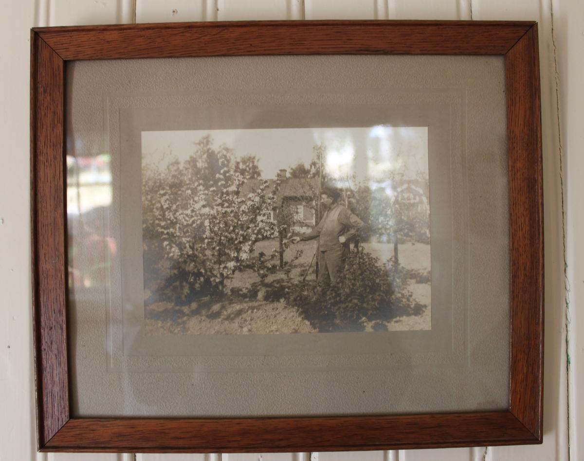 Tavla med fotografi. Bilden visar en man i trädgård. I bakgrunden finns två röda bostäder med vita knutar.  1900-talets första hälft.