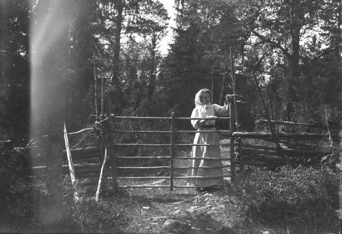 """""""Värmland. Jösse hd. Mangskog sn. Grind med vidjehank ('vihank')."""""""