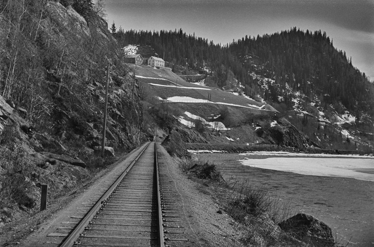Langs Rørosbanen, nær Rognes stasjon.