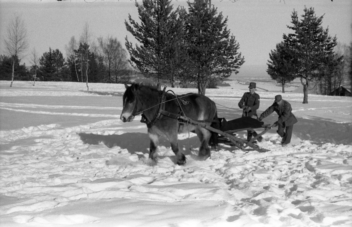 Fire bilder fra Hærens Hesteskole på Starum. vinteren 1955. Improvisert anordning for transport av sykebåre trukket av hest på snøføre.