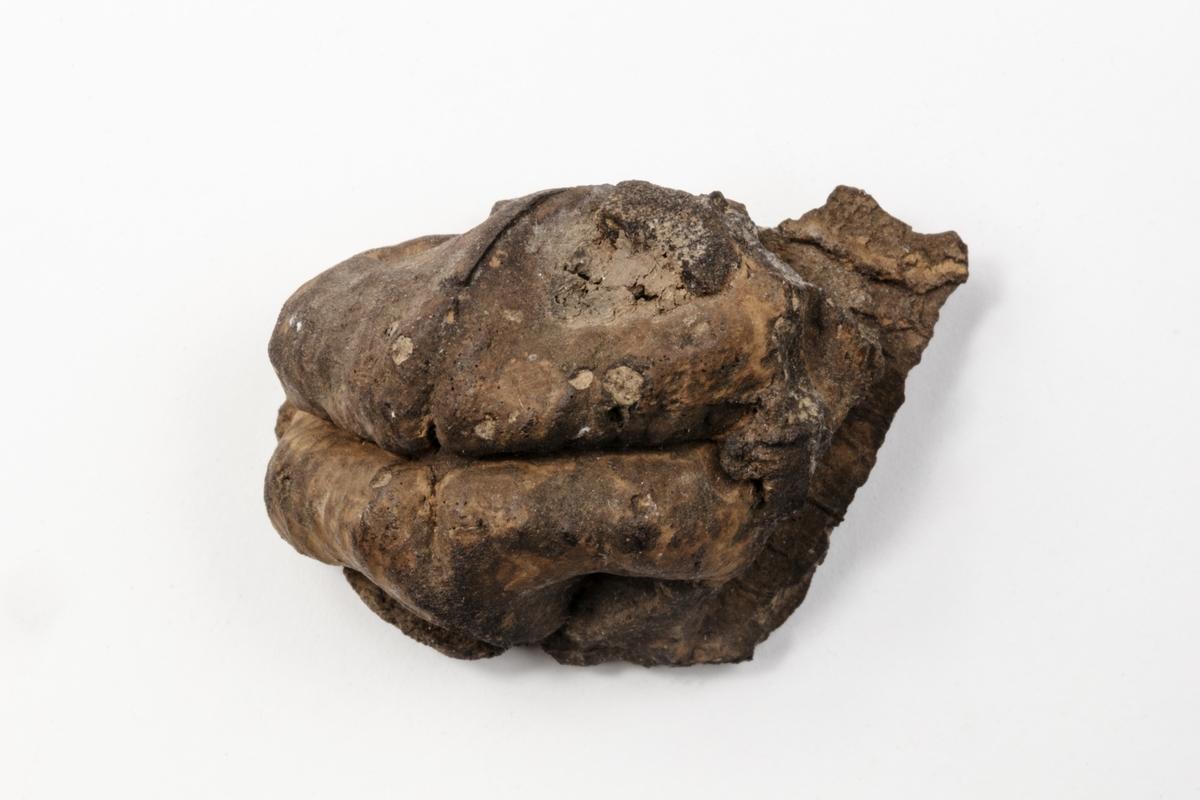 En förstenad nöt. Exemplaret kommer troligen från dåvarande Elbogen i Böhmen i Österrike-Ungern och ingår i Adolf Andersohns samling.