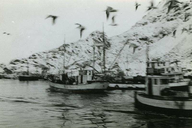 Fiskebåter med fangst