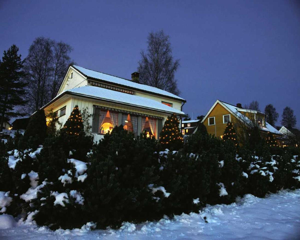 Julebelysning  Hvit julebelysning på tujaer foran enebolig.