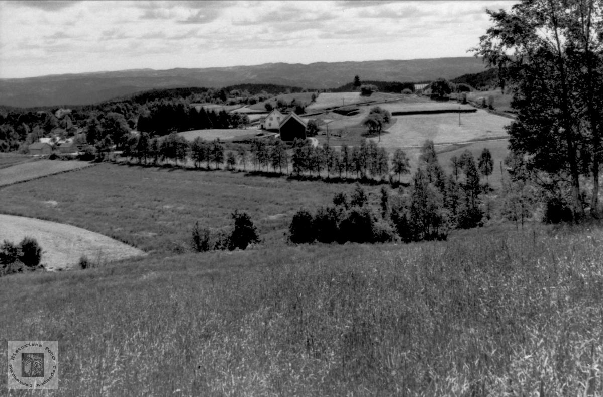 Abelseth i Bjelland
