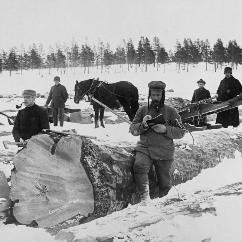 Tømmermåling på Femundsjøen vinteren 1905. Foto/Photo