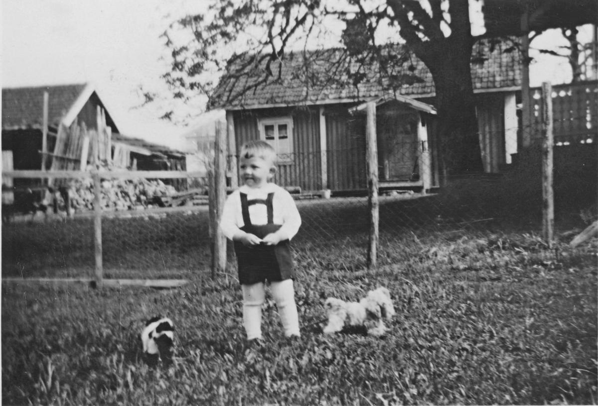 Jon K. Ødegaard, 3 år, ute med lekehunder i Søgarn, Gauterud. 1937. Strusset i bakgrunnen er fra rundt 1900 og står fortsatt.