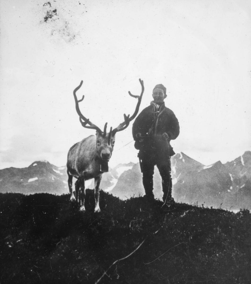 Portrett av samisk mann med reinsdyr. Bildet viser en same som står på en bakketopp og holder et reinsdyr i tau. I bakgrunnen kan man se en fjellkjede. Mannen er kledd i samisk kofte. Reinsdyret har gevir på hodet og en bjelle rundt halsen.