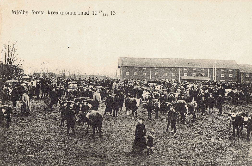 Vykort med motiv från första kreatursmarknaden i Mjölby den 18/11 1913.