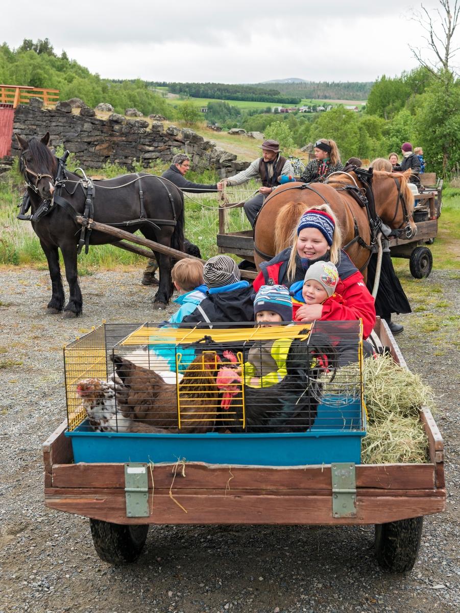 """Fra """"Fløttdagen"""" på Dølmotunet 2016, Tolga, Hedmark. Musea i Nord-Østerdalen. Fløttdagen. Velkomst på Gammelbrua med opplasting og klargjøring til fløtting. Fløttfølge av folk og husdyr, hest og vogn, traktorer og killinger, gardsunger og budeier fra Gammelbrua på Tolga, langs elva, gjennom Tolga sentrum og inn på Dølmotunet. Sesongåpning på Dølmotunet. Arrangement. Arrangementer.  Barn og dyr."""