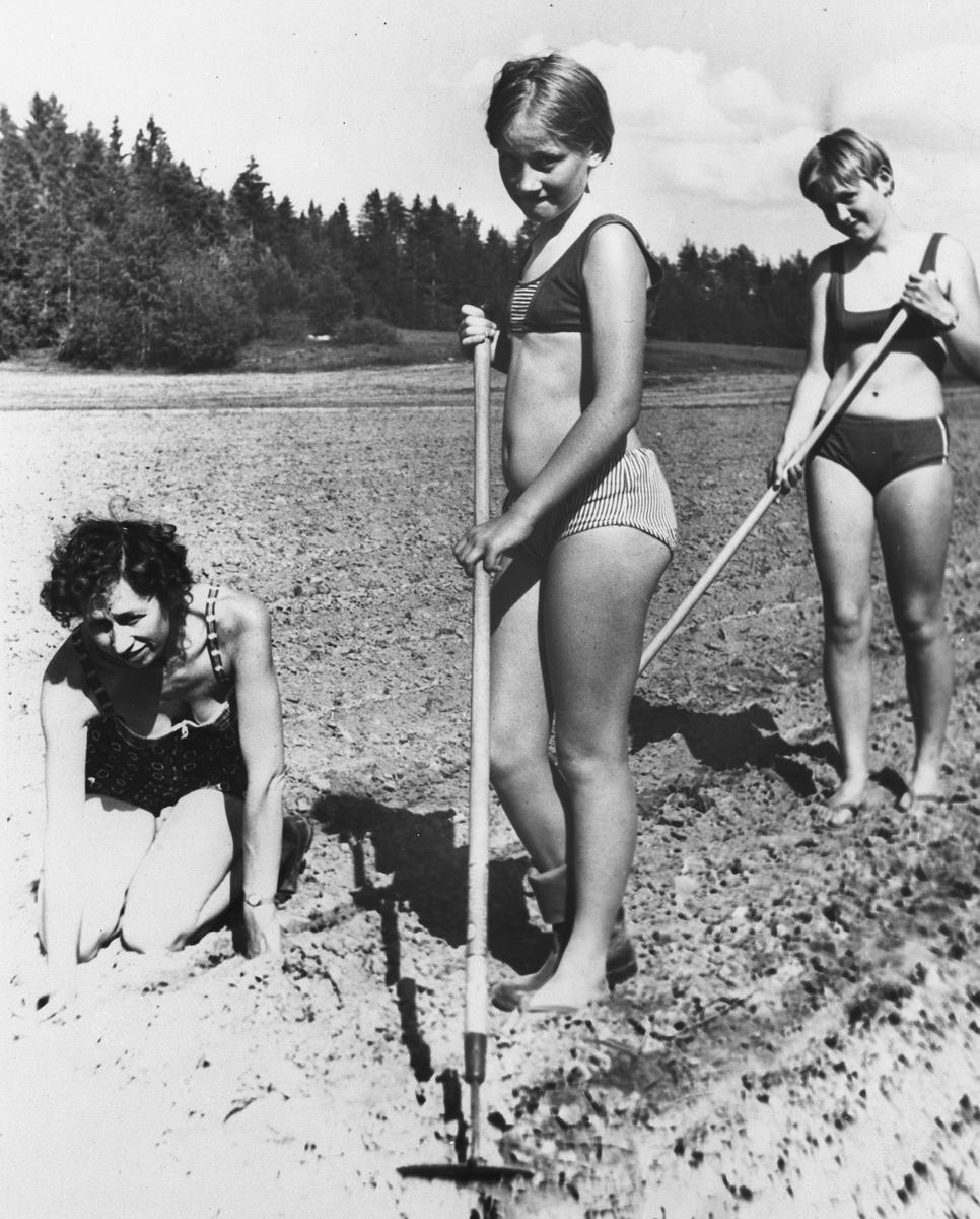 Tre jenter luker i åkeren.