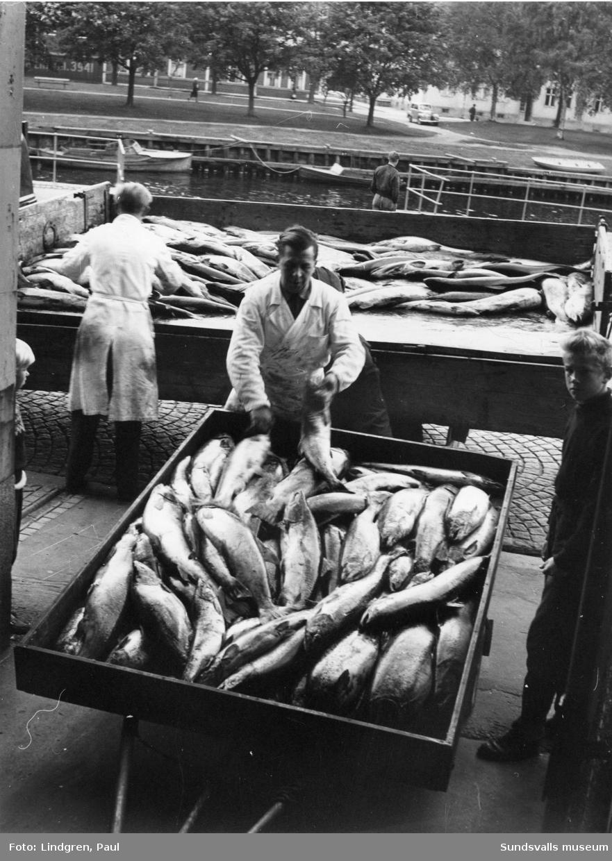 Lax. Försäljning vid Fisktorget.