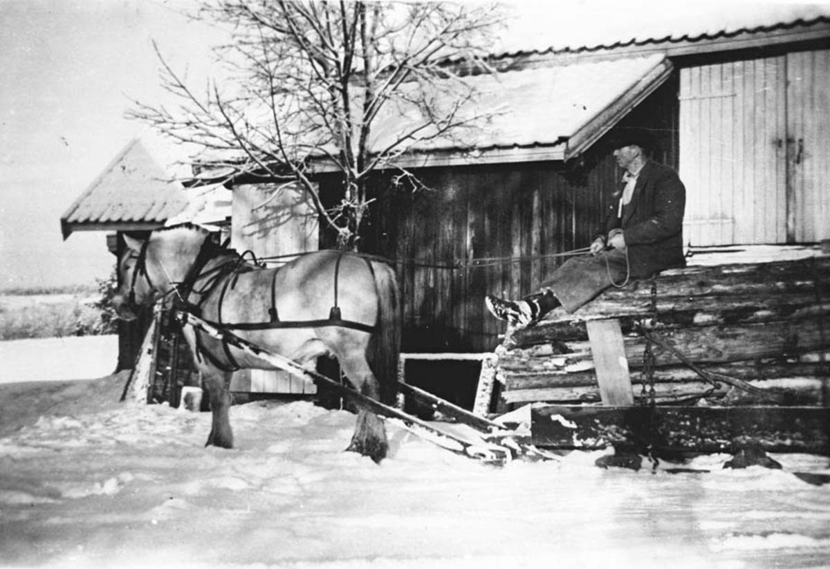Wilhelm Skjønnhaug med hest og tømmerslede på gardstunet.
